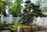 Vườn Nhật 120m2 trong biệt thự Hà Nội
